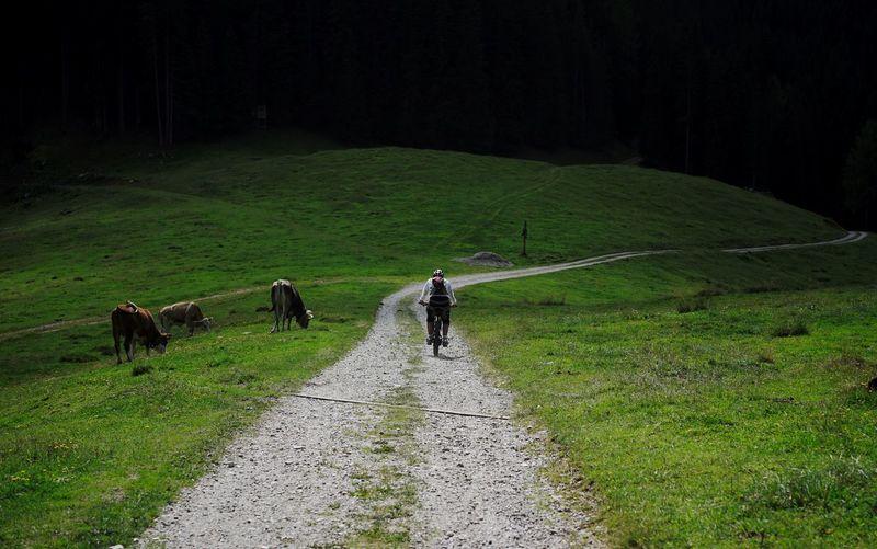 Rear view of horse walking in a field