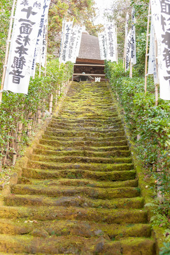 Architecture Built Structure Direction Plant The Way Forward Text No People Building Exterior Nature Building Day Growth Staircase Steps And Staircases Communication Religion Spirituality Belief Place Of Worship Outdoors Mossy Stairs Temple Of Sugimoto