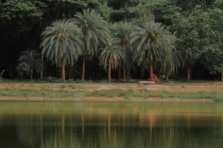 Scenic view of palm trees by lake