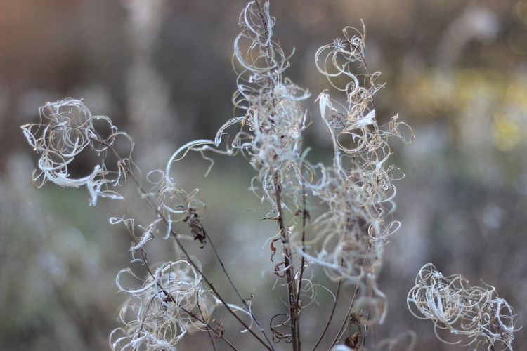 Beauty In Nature Close-up Dead Plant Dry Focus On Foreground Nature Plant Selective Focus