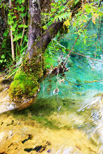 Flowing Flowing Water Tranquil Scene Scenics - Nature Outdoors Moss Green Color Lake Trunk Tree Trunk Tranquility Growth Beauty In Nature Forest Nature Water Tree Jiuzhaigou