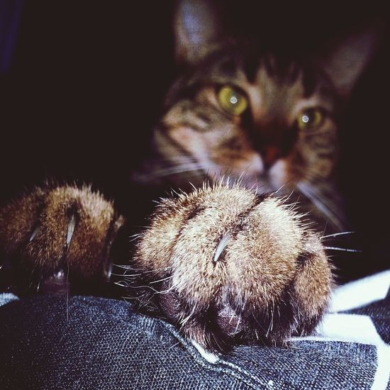 Paws ALL up in my face. Cat Furbaby Pet