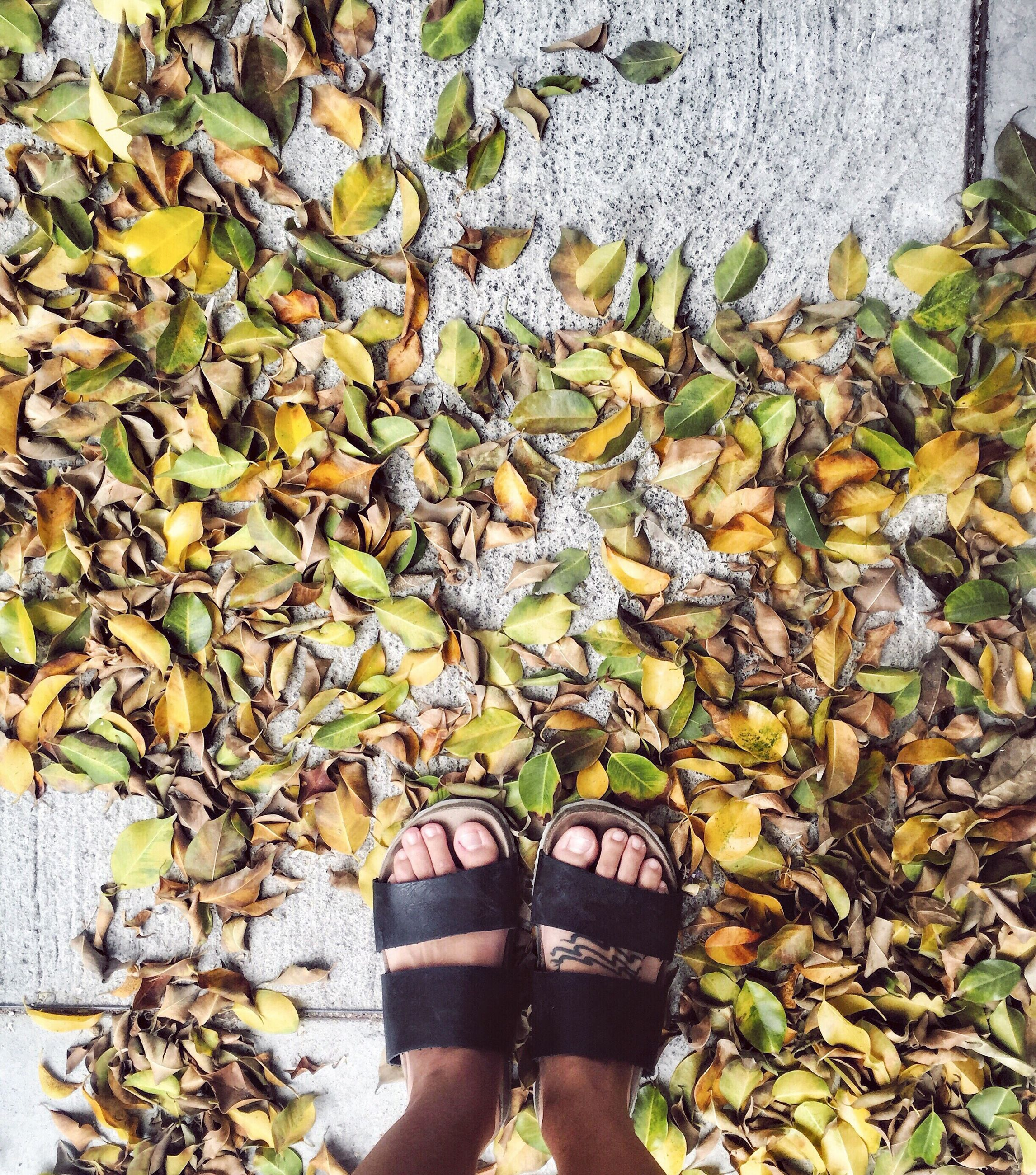 low section, shoe, leaf, person, autumn, standing, change, footwear, personal perspective, season, dry, pair, covering, field, leaves, human foot, plant, yellow, day, nature, fallen, outdoors, tranquility