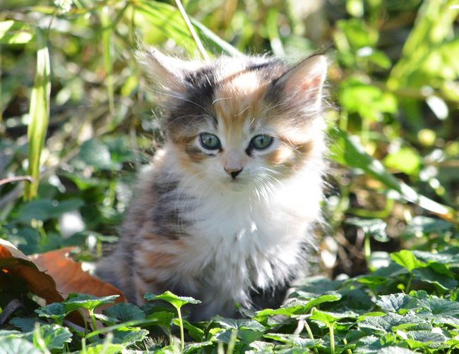 EyeEmNewHere Cuteness overload!😻 Domestic Cat Looking At Camera Feline One Animal Animal Themes Portrait Pets Plant Day Domestic Animals Outdoors Mammal Nature No People Close-up Fluffy Kitten Farm Life Grass Nature Nikon