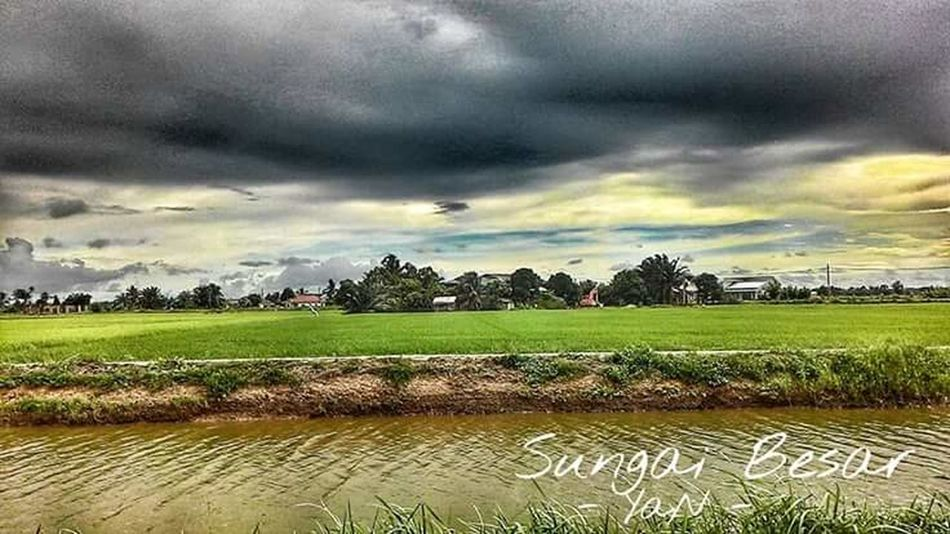 Paddy field Agriculture Beauty In Nature Landscape Rice Paddy Nature Rural Scene Freshness Outdoors Day No People Tree Cloud - Sky Sky Landscape_photography Sungai Besar Sawahpadi Sawah Padi