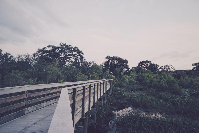 Bridge over trees against sky