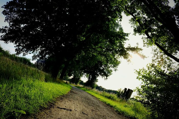 Walking Around Green Plants 🌱 EyeEm Nature Lover Summer ☀ Light And Shadow Getting Inspired Road Nature_collection EyeEm Best Shots