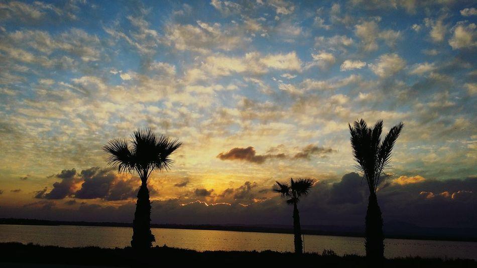 Sunset Sky Clouds And Sky Palm Trees Blue Sky Landscape Lake