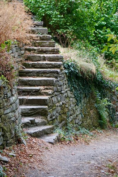 Dry Leaves Freshness Nature Beauty In Nature Day Green Colors Ladders Nature No People Outdoors Plant Steps Steps And Staircases Stones Stonestructures Tree Trees,