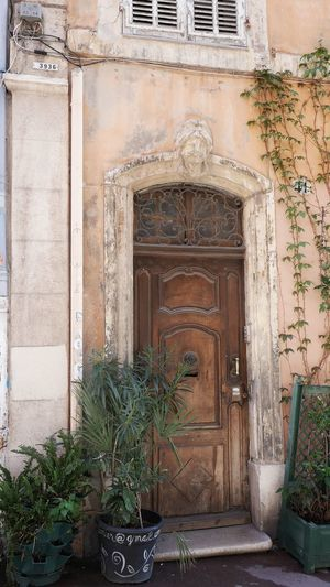 Quartier du panier Façade Old Town Cityscape TOWNSCAPE Potted Plant Potted Plants Plant Street Streetphotography Street Photography Marseille Doorporn Architecture Architectural Detail Door City Architecture Built Structure Flower Pot Pot Houseplant Entryway Entry Closed Door Entrance Doorway Front Door