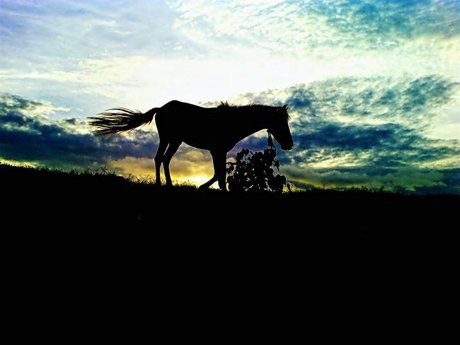 Hp...Horse Power