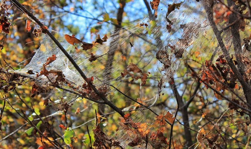 Low angle view of spider web on tree in forest