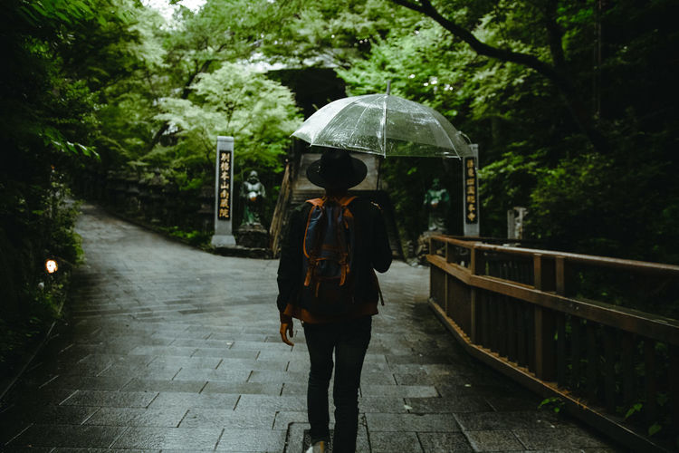 Forest Japan On The Way Travel