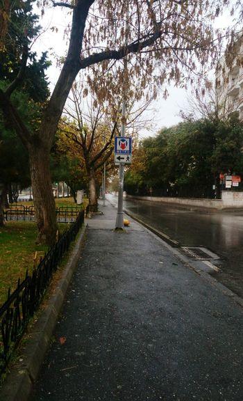 ☔🍁 Tree Road Sign City Road Street Sky