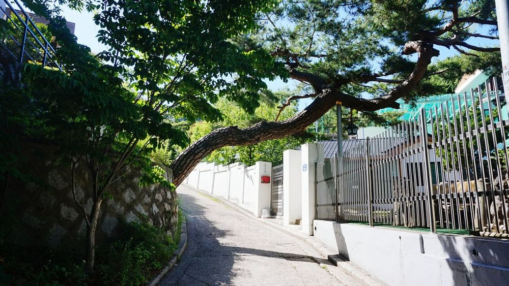 Tree Day The Way Forward Outdoors Built Structure Architecture Road Building Exterior No People Sky Nature Korea Seoul Seoul, Korea