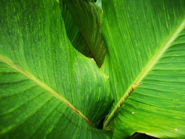 Plants inside