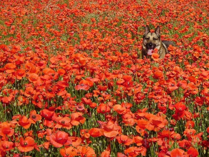 Animal Themes Beauty In Nature Day Flower Fragility Nature No People Non-urban Scene One Animal Petal Pets Red Scenics Season  Dog perro Perro Flowers, Nature And Beauty Pollen