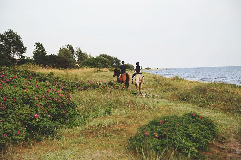 Horses Horse Horse Riding Horseriding Horsebackriding  Nature_collection Nature Photography Two Animals Two Of A Kind Coastline Coastal Seaside Riding Riding Horses Girls Outdoors Meadow Wildflowers Farm Life Farmland Pony