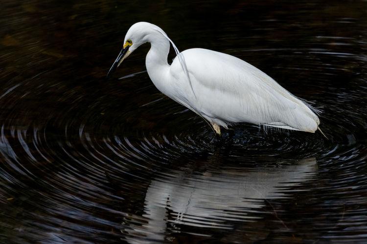 wave Bird