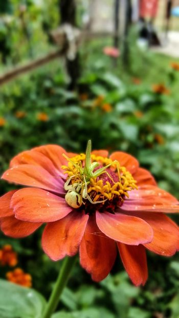 Doğa Nature çiçek Flower Vahşi Hayat Wild Life Animal Hayvan Spider Orumcek çekirge Camera:Samsung Galaxy S6 Edge Plus (5312x2988)