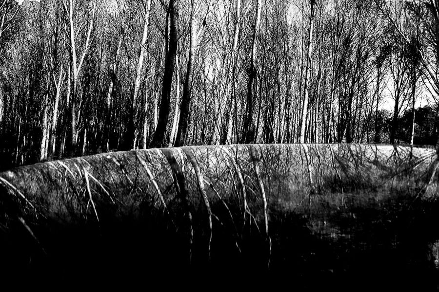 A liquified forest Artistic Vision Arts Culture And Entertainment Beauty In Nature Black And White Dreamy Forest Landscape Moody Nature No People Oniric Atmosphere Outdoors Tree Vision