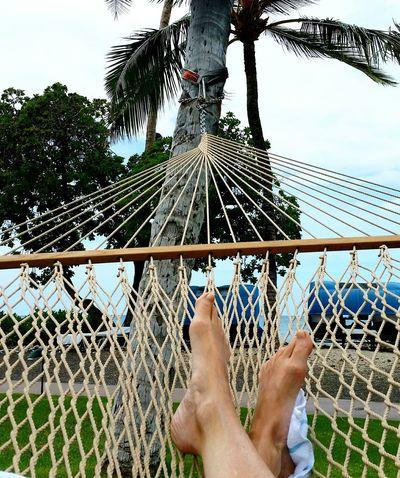 Hanging Out Relaxing Enjoying Life Moment Of Zen Hawaii Feetselfie Feet Tropical Paradise Tropical Climate Tropical Palm Tree Palm Trees Hammock Ocean View