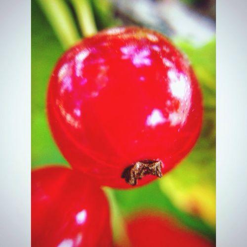 ягода лето смородина мои фото фотонателефон учусьфотать Berry Summer MyPhotography Likeforlike
