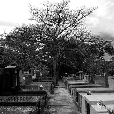 Blackfriday Cemetery Urban Blackandwhite City Zonasul Saopaulo Brasil Photograph Ig_asylum Aj_graveyard Graveyard_dead Taphophiles_only Tv_churchandgraves Church_masters Masters_of_darkness Fa_sacral Tv_urbex Vivoartesacra Grave_gallery Kings_gothic Obscure_of_our_world Photography Igw_gothika Dark_captures the_great_gothic_world darkness
