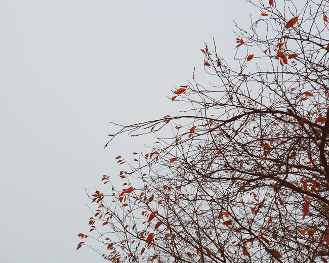 Low angle view of bird on tree against clear sky