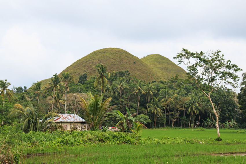 Chocolate Hills and farmer house ASIA Beauty In Nature Bohol Built Structure Chocolate Hills Clouds And Sky Countryside Day Grass Green Green Color Growth Landmark Mountain Nature Outdoors Overcast Philippines Plant Scenics Sky Solitude Tranquil Scene Tranquility Tree