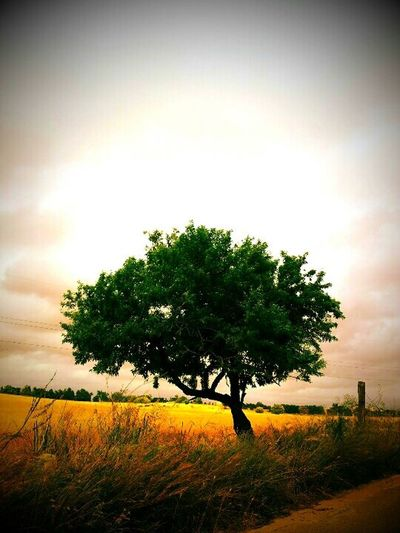 Tree Tree Nature Green Paesaggio