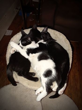cuddlebuddies Close-up Indoors  Animal Pets Domestic Animals Photos By Jeanette Feline No People Animal Themes Adorable Pets Sleeping Beauty Sleepy Cat Sleeping Animal Kitten Love Kittens Kitty Cat Kitten Photography Family Cat Family Cat From Above
