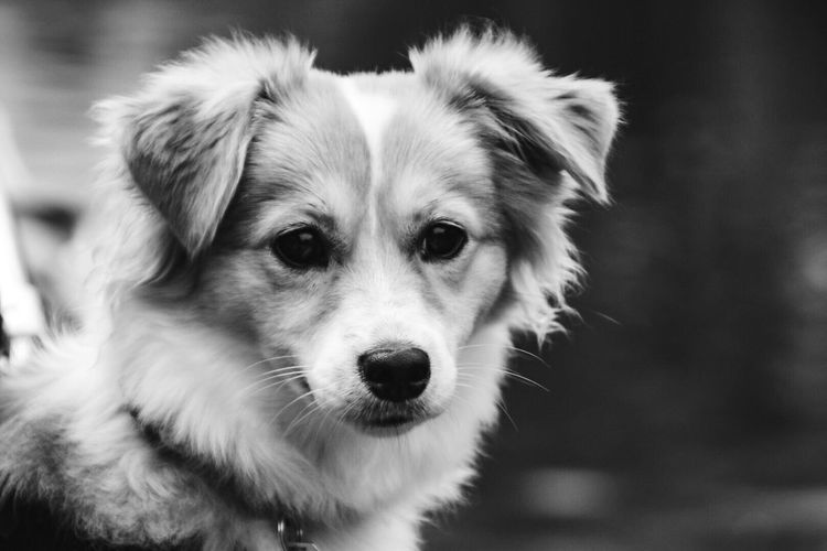 Dog Pets One