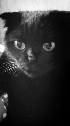Blac&white  Beauty Cat♡ Pet Photography