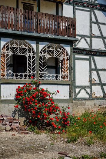 Abbruchhaus Fachwerkhaus Renovierung Architecture Building Exterior Built Structure Day Flower Fragility Growth Nature No People Outdoors Plant Rosenbusch Urban Window Window Box