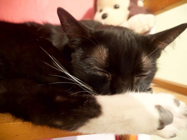 Cats Omalé dort.