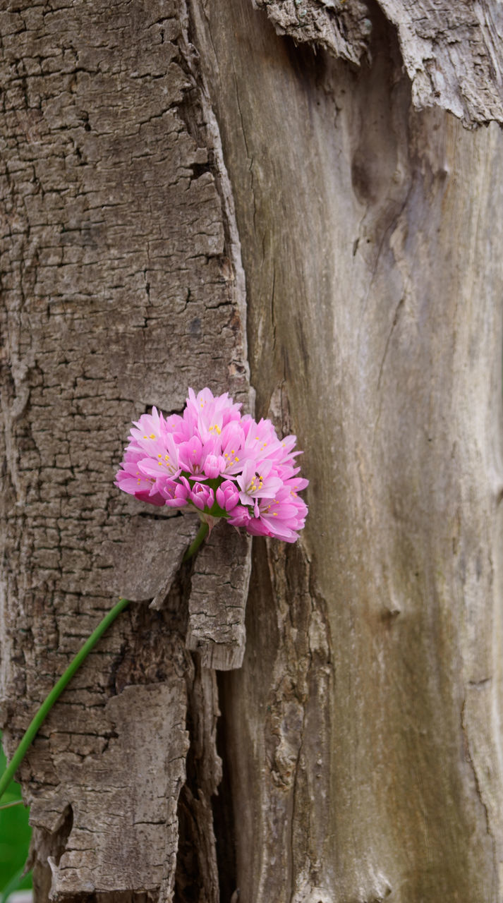 Close-Up Of Pink Flower On Plant Bark