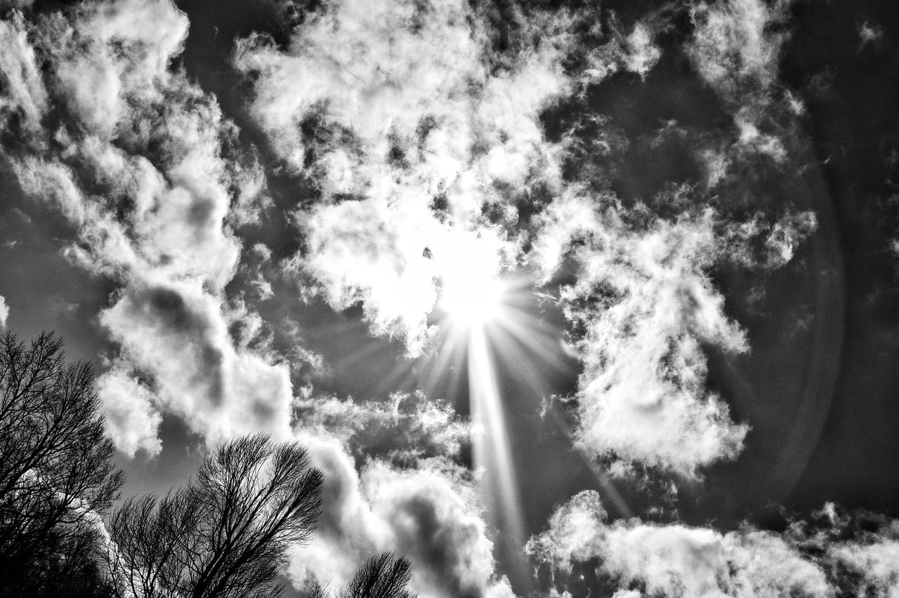 low angle view, sunbeam, nature, beauty in nature, sky, outdoors, no people, tree, day, sunlight, growth, tranquility, scenics