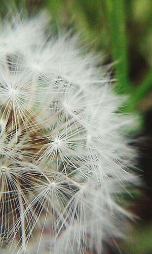 Dmuchawce Latawce Wiatr Springtime Happy :) Beautiful