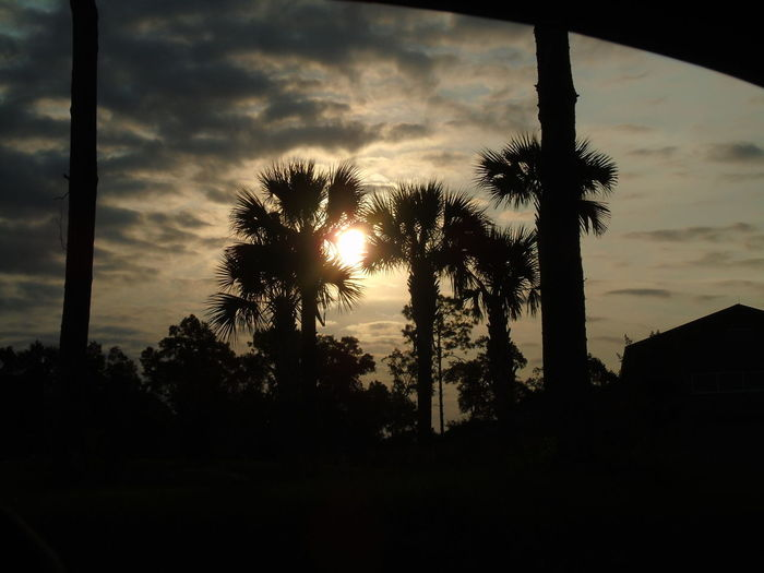 #life Is Good  #love Sunset! Beautiful Evening! God Is Goo!!! I Love Nature! Outdoors Tallahassee Woods!! Tranquility