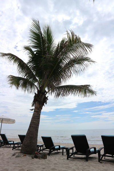 Coconut Tree Coconut Beach Coconut Trees And Beaches Beach PhotographyBeach Seats Available Seats On The Beach Nice Weather Nice Weather Nice Mood Landscape_photography Landscape_Collection Beach View