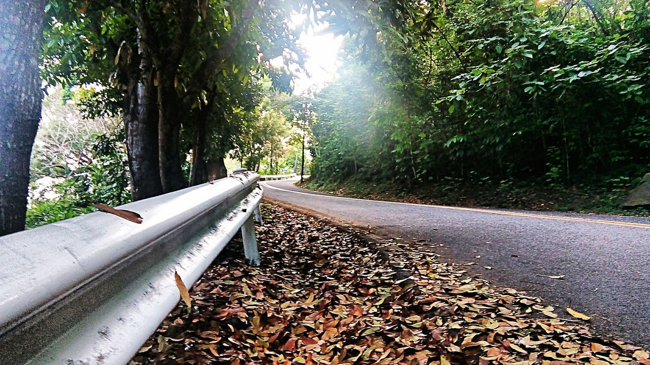 SUNLIGHT FALLING ON ROAD AMIDST TREES IN FOREST