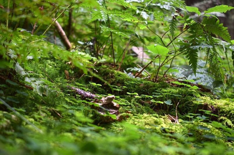Waldgrün Selective Focus Green Color Moss Forest Close-up Nature Green Plant Tranquility Botany WoodLand Beauty In Nature
