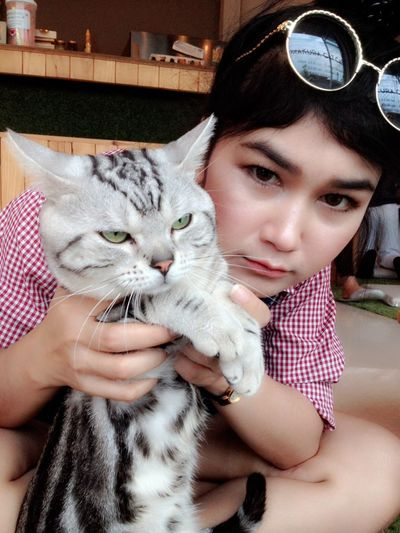 Cat Domestic Animals Friendship Indoors  One Animal Pets Young Adult Pet Photography  Pet American Shorthair Americanshorthair Teen Woman Girl Lovelycat Lovepet