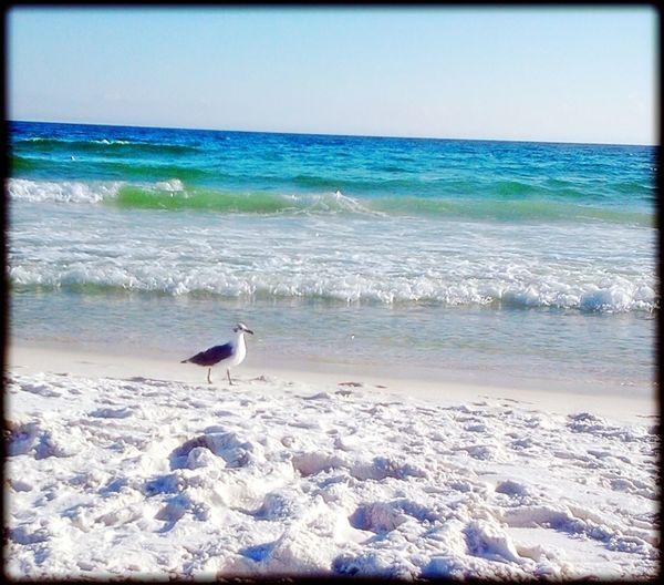 Life Is A Beach Beach Life On The Beach Ocean Waves Waves Ocean Beach Photography Beach Oceanside Landscapes With WhiteWall Seagull Ocean Bird Seagulls And Sea