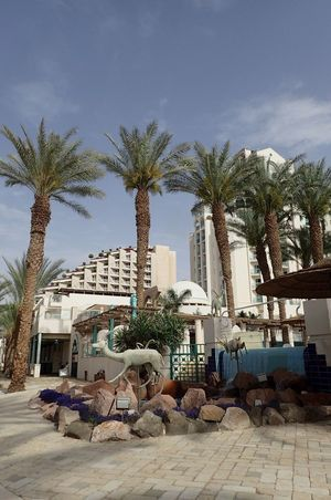 No People Outdoors Building Exterior Architecture Travel Destinations Israel Palm Tree Hotels Area Eilat