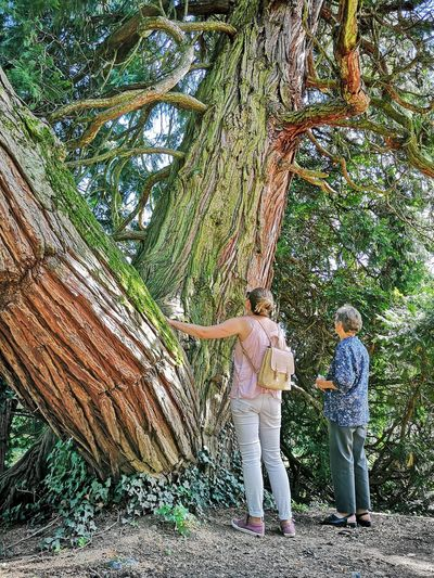 People standing by tree trunk