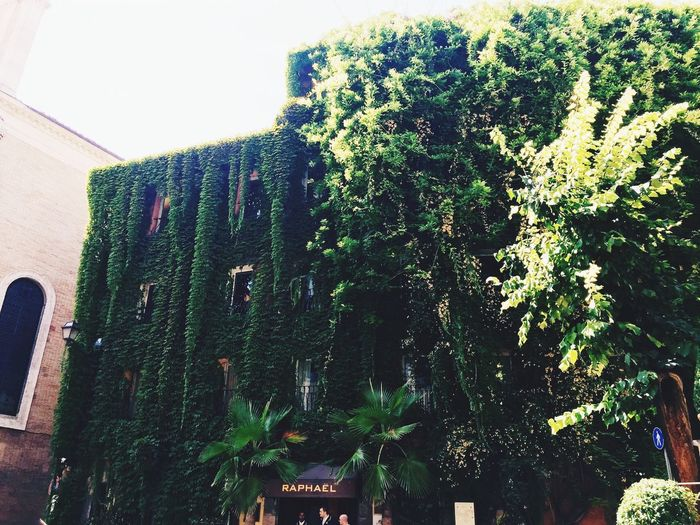 verde romano Hello World IPhoneography Roma Rome Italy Italia Enjoy The Summer Botany Botanical