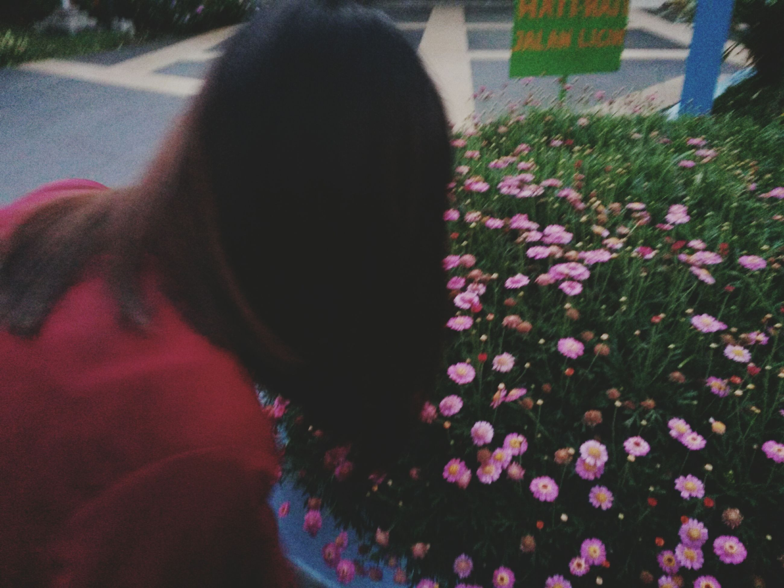 flower, fragility, petal, pink color, rear view, lifestyles, flower head, plant, growth, freshness, focus on foreground, close-up, day, blooming, nature, indoors, park - man made space, person