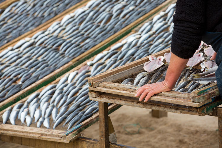 Fresh Fish Herring Seafood Tradition Adult Body Part Day Drying Fish Drying Fishes Drying Rack Fish Fishing Food Hand Holding Human Body Part Human Hand Lifestyles Low Section One Person Outdoors Prepairing Real People Standing Wood - Material